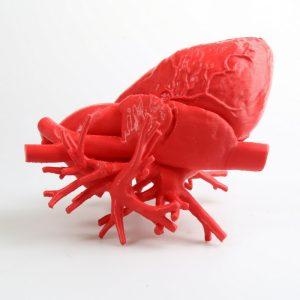 3D printed human heart with Fiberflex 40D